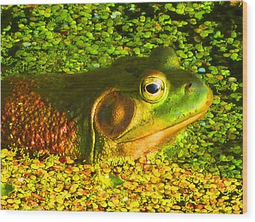 Happy As A Frog In A Pond Wood Print