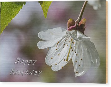 Happy Birthday Blossom Wood Print by Michele Wright