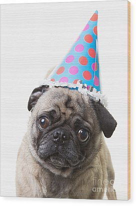 Happy Birthday Pug Card Wood Print by Edward Fielding