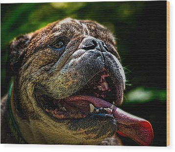 Wood Print featuring the photograph Happy Dog by Bob Orsillo