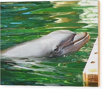 Happy Dolphin Wood Print