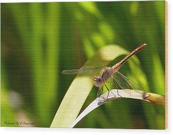 Happy Dragonfly 01 Wood Print