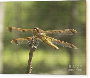 Happy Dragonfly Wood Print