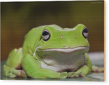 Happy Frog 0003 Wood Print by Kevin Chippindall