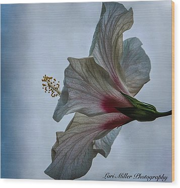 Happy Hibiscus At Biltmore Conservatory Wood Print