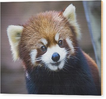 Happy Red Panda Wood Print by Jaki Miller