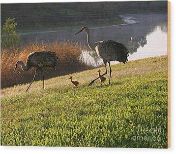 Happy Sandhill Crane Family - Original Wood Print by Carol Groenen