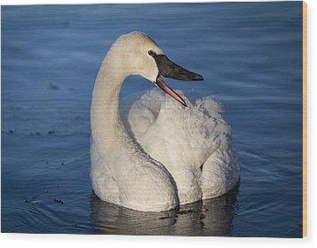 Happy Swan Wood Print by Patti Deters