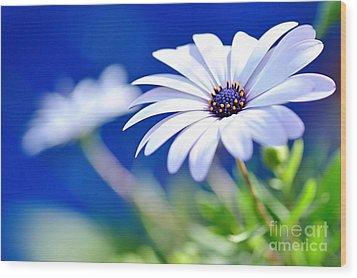 Happy White Daisy 2- Blue Bokeh  Wood Print by Kaye Menner