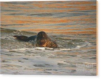 Wood Print featuring the photograph La Jolla Seal Sunset by John F Tsumas