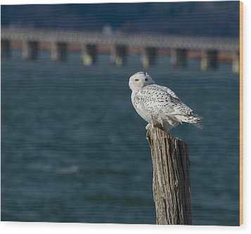 Wood Print featuring the photograph Harbor Sentry by Stephen Flint