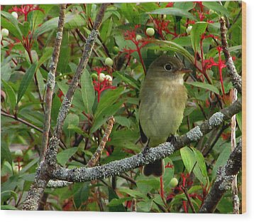Wood Print featuring the photograph Hardly The Least Least Flycatcher by Kimberly Mackowski