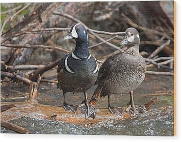 Wood Print featuring the photograph Harlequin Pair by Jack Bell