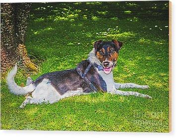 Harley Resting In Dappled Shade Wood Print