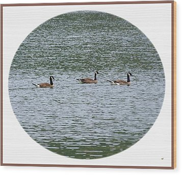 Harmonious Canada Geese Wood Print by Will Borden