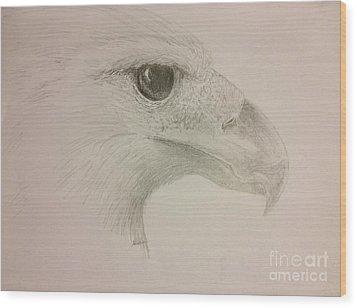 Harpy Eagle Study Wood Print