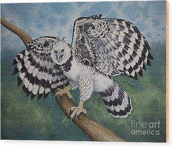 Harpy Eagle Wood Print by Tish Wynne