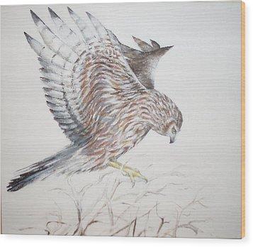 Harrier Hen Wood Print