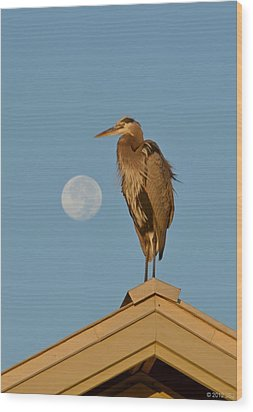 Wood Print featuring the photograph Harry The Heron Ponders A Trip To The Full Moon by Jeff at JSJ Photography