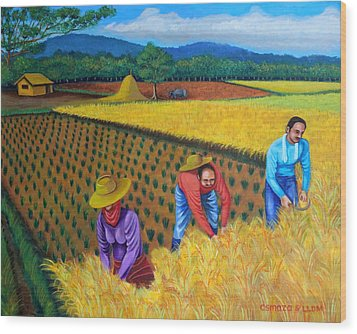 Harvest Season Wood Print by Lorna Maza