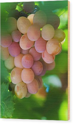Harvest Time. Sunny Grapes Wood Print by Jenny Rainbow