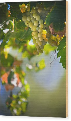 Harvest Time. Sunny Grapes V Wood Print by Jenny Rainbow