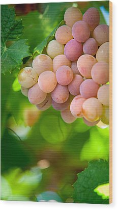 Harvest Time. Sunny Grapes Viii Wood Print by Jenny Rainbow