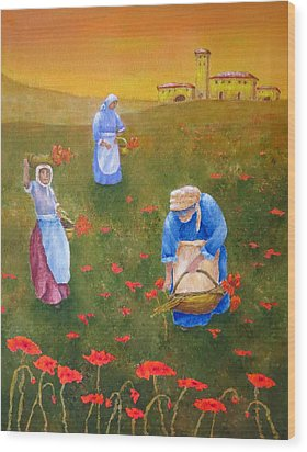 Harvesting Poppies In Tuscany Wood Print by Pamela Allegretto
