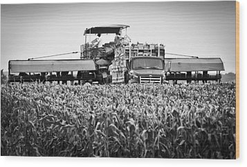 Wood Print featuring the photograph Harvesting Time by Ricky L Jones