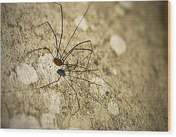 Harvestman Spider Wood Print by Chevy Fleet