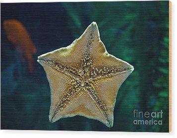 Has Anyone Seen Nemo Wood Print