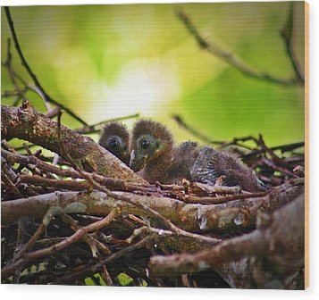 Wood Print featuring the photograph Hoatzin Hatchlings In The Amazon by Henry Kowalski