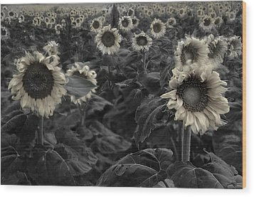 Haunting Sunflowers Field 3 Wood Print by Dave Dilli