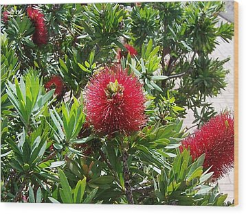 Wood Print featuring the photograph Hawaiian Bottle Brush Flower by Brigitte Emme