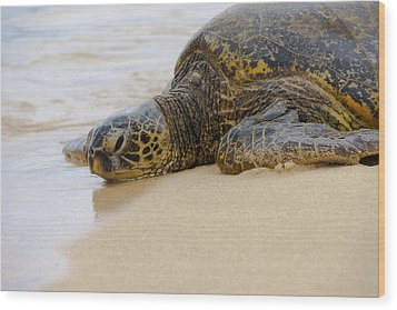 Hawaiian Green Sea Turtle 3 Wood Print by Brian Harig