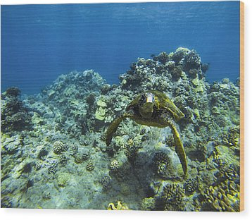 Hawaiian Green Sea Turtle Wood Print by Brad Scott
