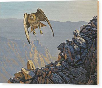 Hawk Above Beartooth Pass Wood Print by Paul Krapf