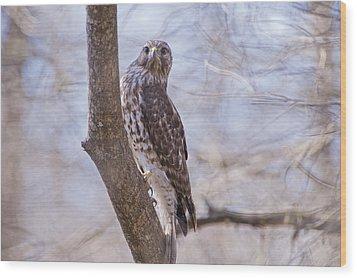 Hawk At Cypress Island Wood Print by Bonnie Barry