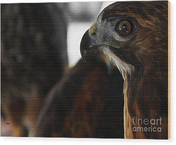 Hawk Eye Wood Print by Steven Digman