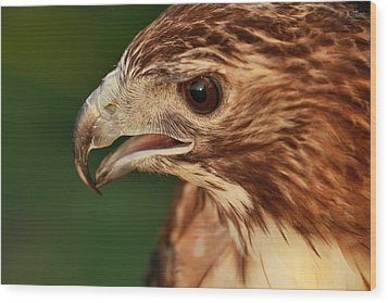 Hawk Eye Wood Print by Dan Sproul