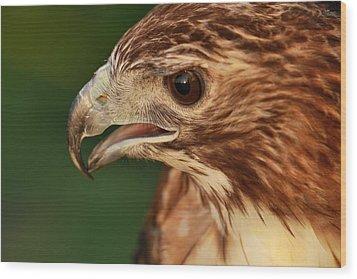 Hawk Eyes Wood Print by Dan Sproul