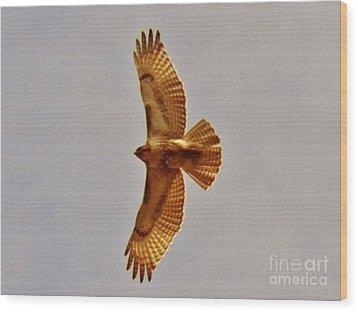 Hawk Flight Wood Print by Judy Via-Wolff