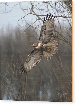 Hawk In Flight Wood Print by Angie Vogel