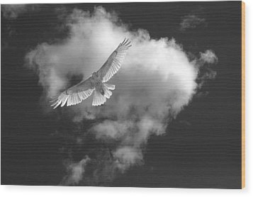 Hawk In Flight - Bw Wood Print