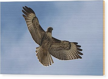Wood Print featuring the photograph Hawk In Flight  by Christy Pooschke