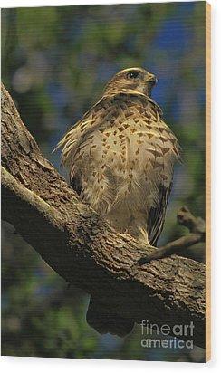 Hawk In Soft Light Wood Print by Deborah Benoit