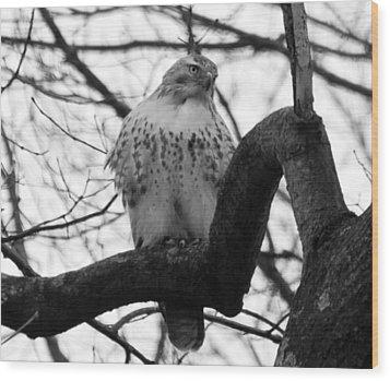 Hawk In Tree Wood Print by Valerie Wolf