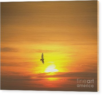 Wood Print featuring the photograph Hawk Into The Sunset by Jim Lepard