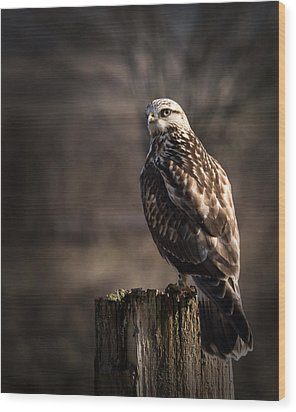 Hawk On A Post Wood Print
