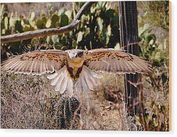 Hawk On The Hunt Wood Print